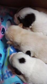子犬3並び