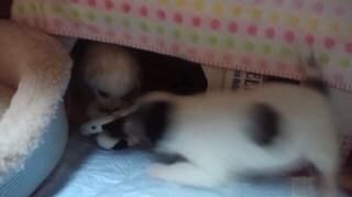 子犬おもちゃ2