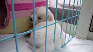 子犬寝顔くん