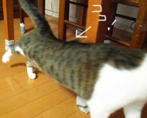 bosabosaomi091024_2.jpg