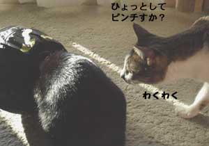 mahounokuronekobukuro5.jpg