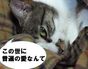 uwaki3.jpg