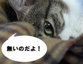 uwaki4.jpg