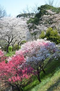 4月7日 平尾霊園(福岡市中央区)