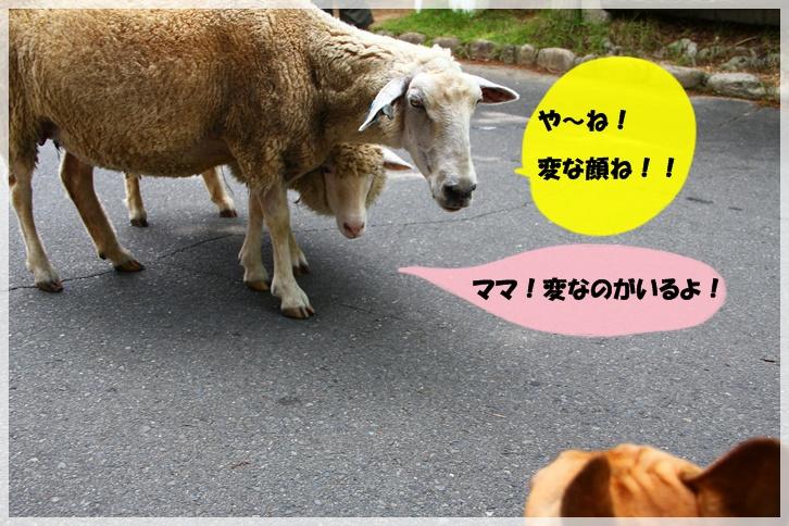IMG_7404_20110806015010.jpg