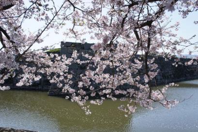 桜はまだ満開でした
