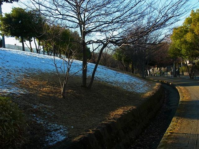 緑道の雪景色