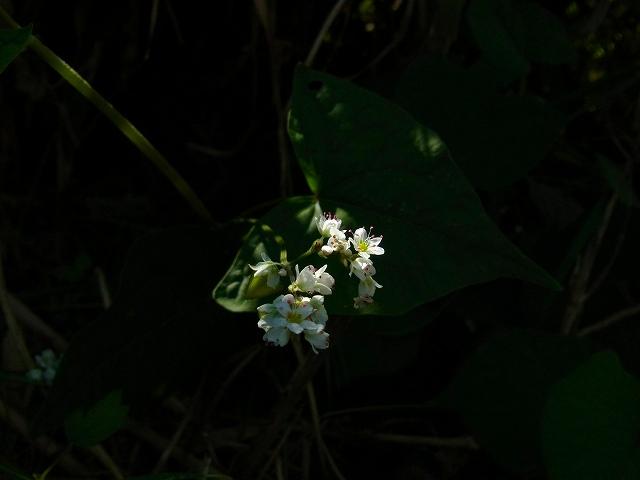 川沿いでよく見られる花です!