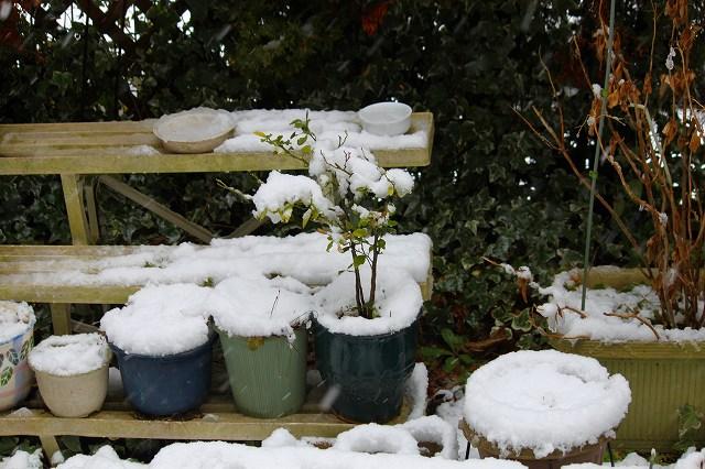 植木鉢にも積もっています!