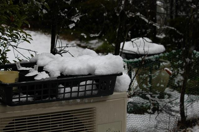 種まきポットの雪、結構おおいです!