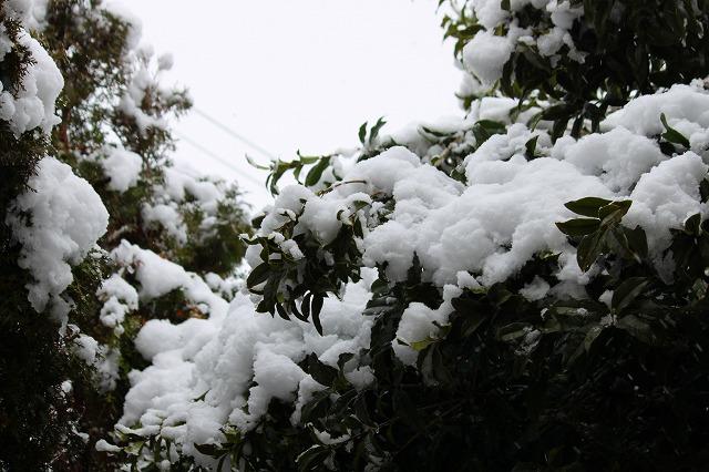 粉雪のような細かい雪でした!