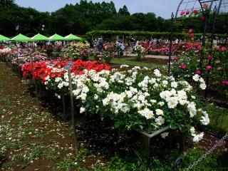 神代植物公園 3