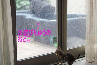 水遊びとガラスと猫のコピー