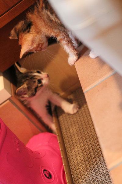 爪研ぎと猫2