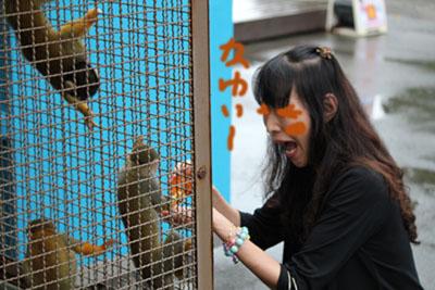 お猿かわいいブログ用