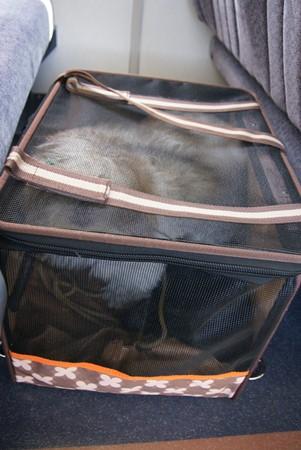 キャリーバッグの中の獅子丸1