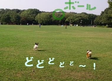 ボール01