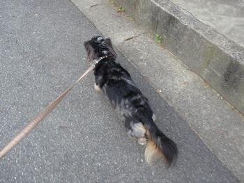 お散歩中P1070628