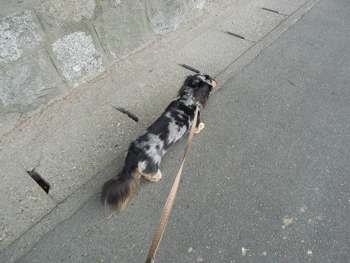 散歩3P1080024