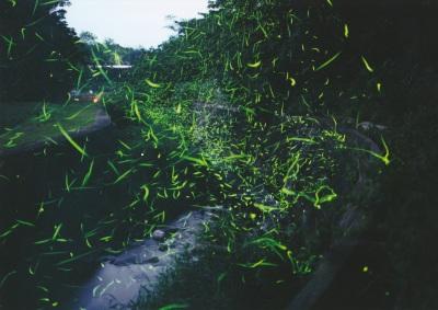 ほたる2011-1-1