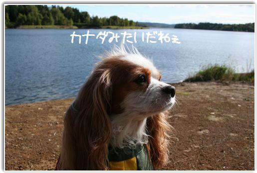 朱鞠内湖は今日も美しい