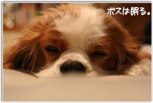 おやすみちゃん