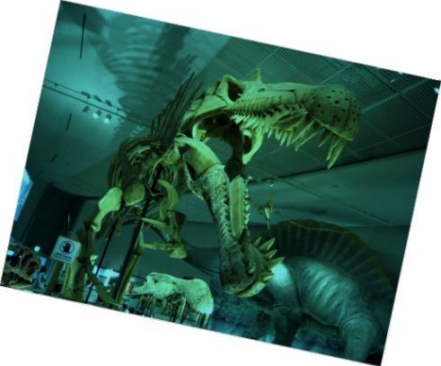 ピノサウルス