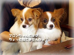 2009-08-18 01;21_P8180034-300