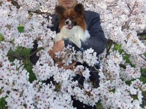 ラブと桜3