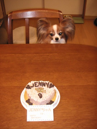 9歳になったジェニーちゃん♪
