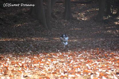 見事な落ち葉の絨毯!
