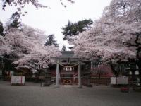 世良田東照宮の桜