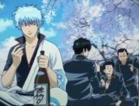 銀魂 花見と酒