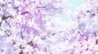 参考資料 桜