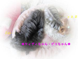 001ピコ&ケィディ
