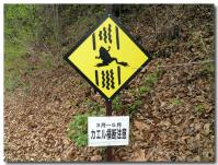 カエルに注意