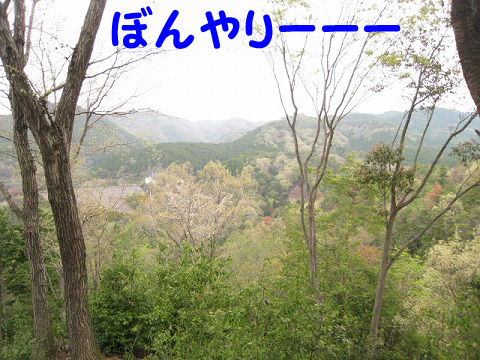IMG_4875.jpg