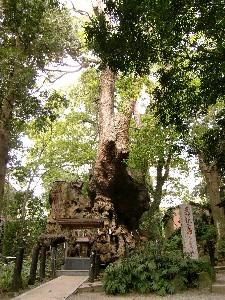 来宮神社大樹