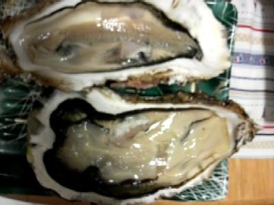 生牡蠣広島