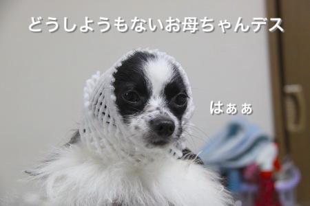 IMG_3134_1.jpg