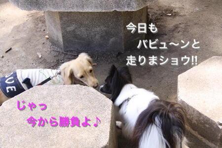 IMG_4408e.jpg