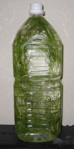 ペットボトル水草