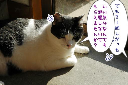 03_20111129153408.jpg
