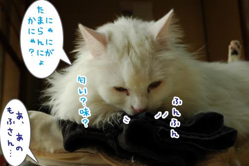 06_20120227182453.jpg
