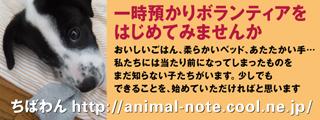 azukari_dogB.jpg