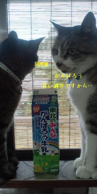 chibi-momokun.jpg