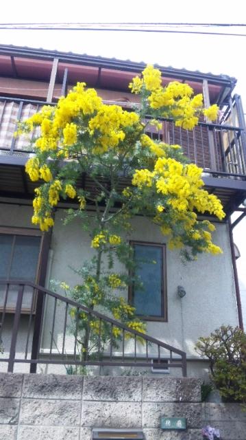 moblog_f01ec102.jpg