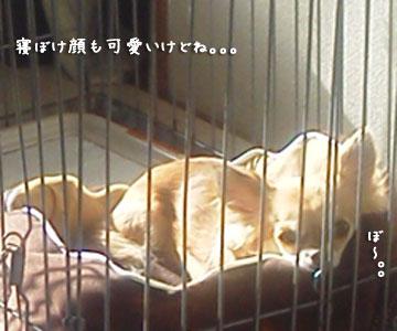 NEC_0001_20120208143433.jpg