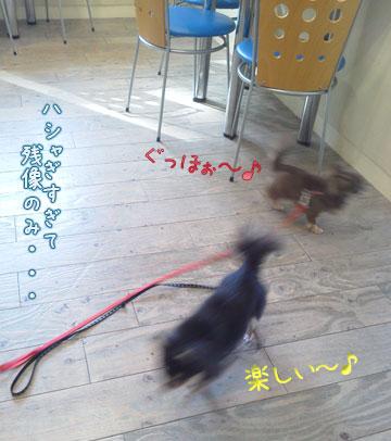 NEC_0001_20120301144159.jpg