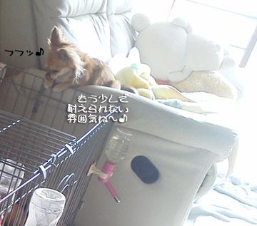 NEC_0004_20120113121110.jpg